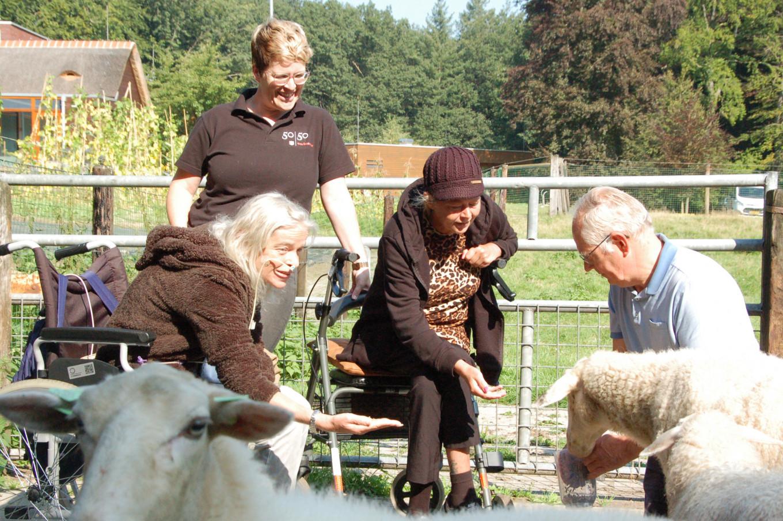 Deelnemers helpen bij het verzorgen van de dieren